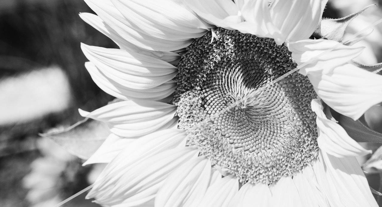 Creating black and white effects in photoshop basics tutorial